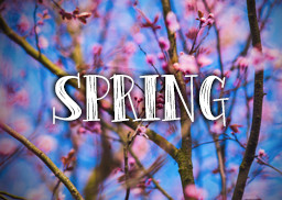 spring_logo_featured